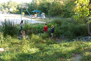 A lush natural space on the edge of the schoolyard. (same view towards basketball, one year later)